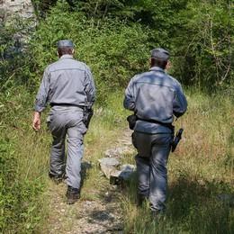 Casnigo: gabbie, reti e 46 uccelli morti Bracconiere denunciato dalla Forestale
