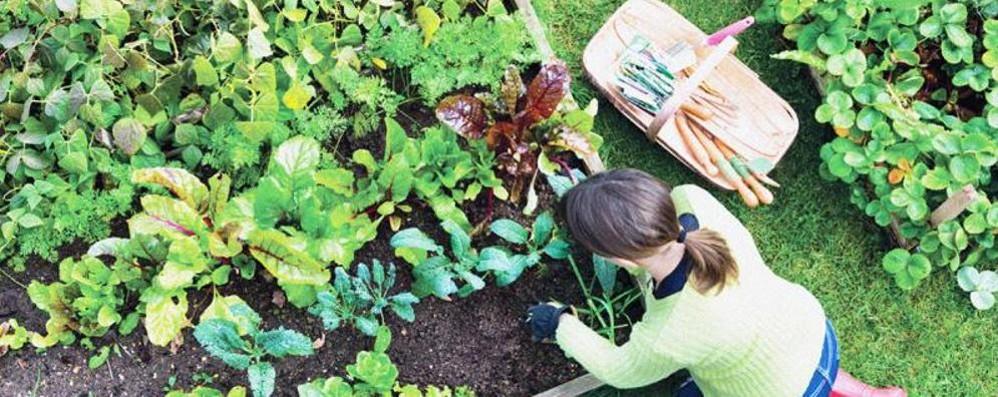 Crisi, sempre di più coltivano un orto Anche nel settore cresce il fatturato