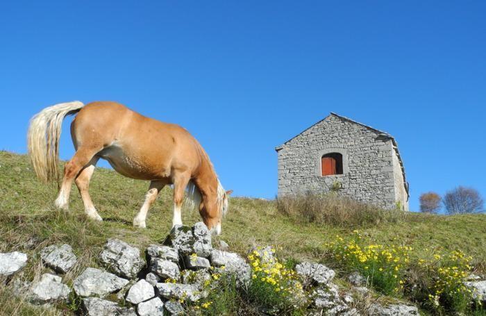 Avelignese al pascolo autunnale sul monte Linzone