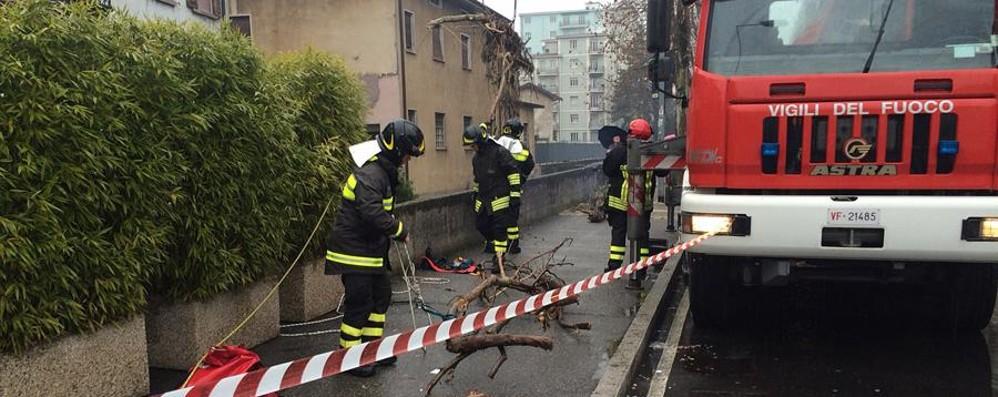 Pianta ostruisce la roggia del Morla Pompieri al lavoro in viale Giulio Cesare