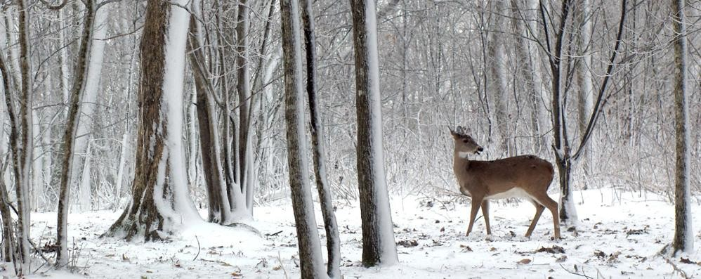 L'inverno prepara il colpo di coda  Rischio freddo e neve tra 6 e 9 marzo