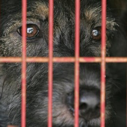 Tutela animali: Lav raccoglie 1.150 firme «Stop maltrattamenti, regole subito»
