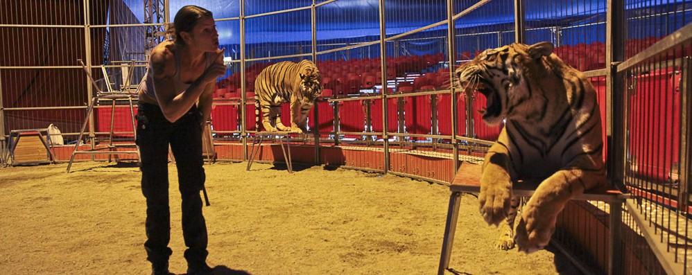 Milano dice no ai circhi con animali «Ospiti non graditi». Cosa ne pensi?