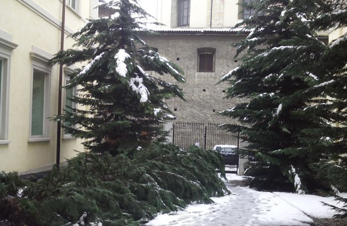 Il pino caduto nel cortile del tribunale