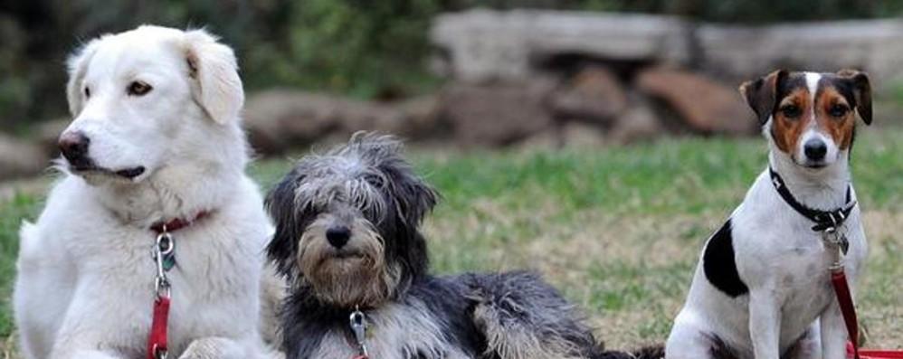 A processo per i «bisognini» del cane Assolto grazie alla bottiglietta d'acqua