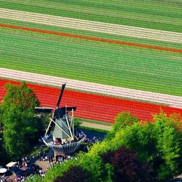 Olanda, è tulipanomania da Haarlem al Keukenhof