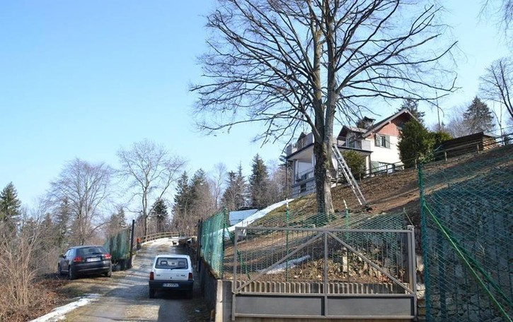 Pota l'albero, scende ma cade Un 29enne finisce in ospedale