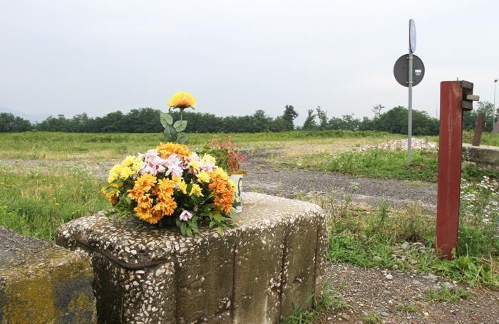 Fiori nel campo di Chignolo, dove fu trovato il corpo di Yara Gambirasio