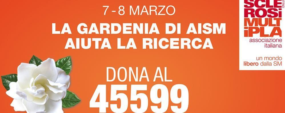 7 e   8 marzo, compra una gardenia Aiuterai la lotta alla sclerosi multipla