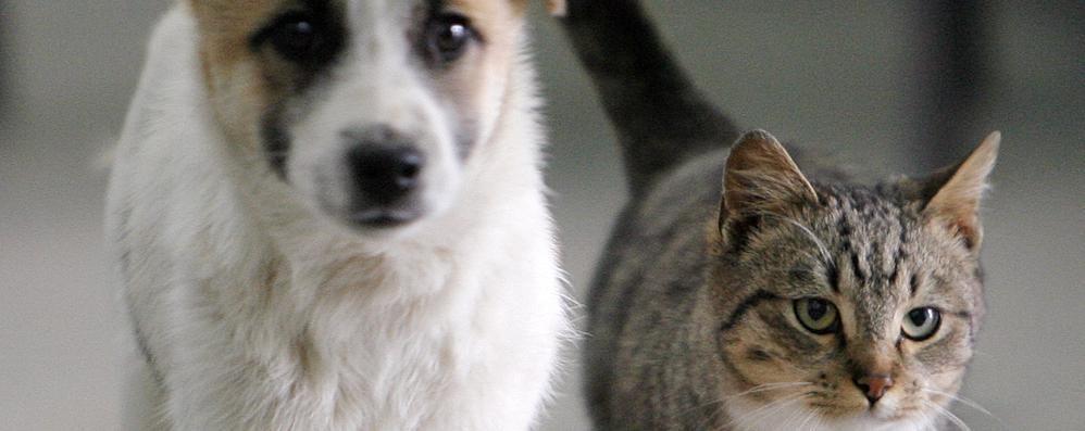 Cibi Vegetariani Per Cani E Gatti Attenzione Si Rischia Una