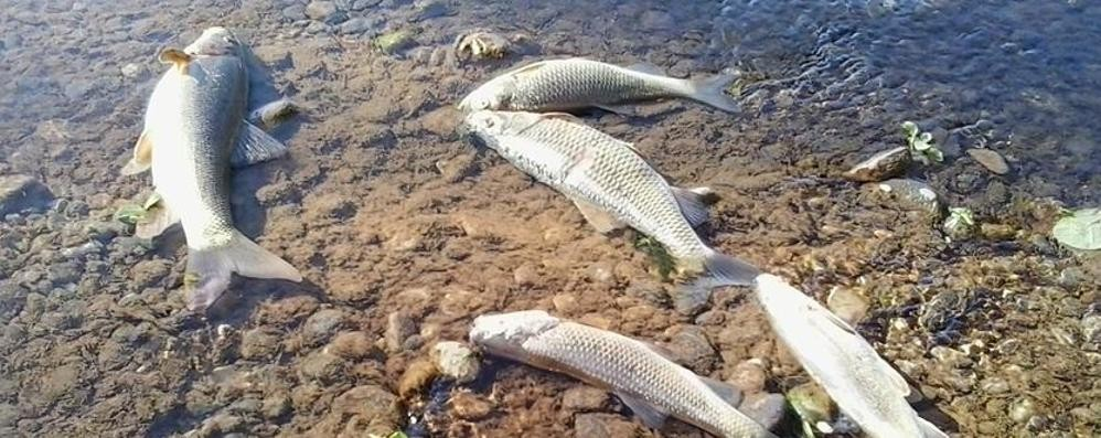 Rifiuti nel Cherio, fiume da salvare Allerta sul web e volontari al lavoro - Foto