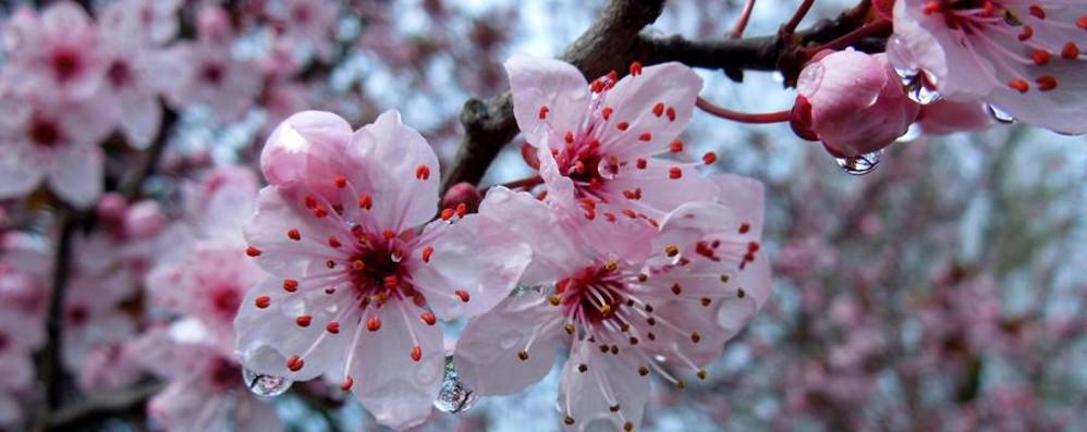 Una settimana di vera primavera Ma a Pasqua tempo così così