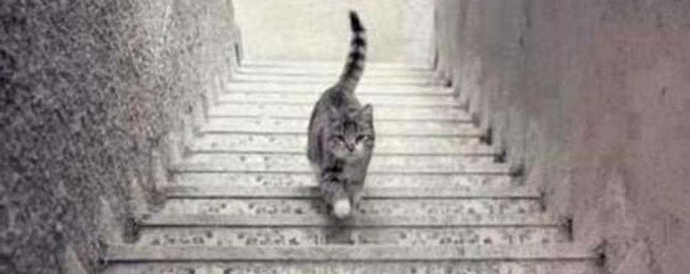 Il gatto sulle scale: sale o scende? Dal web arriva un altro tormentone