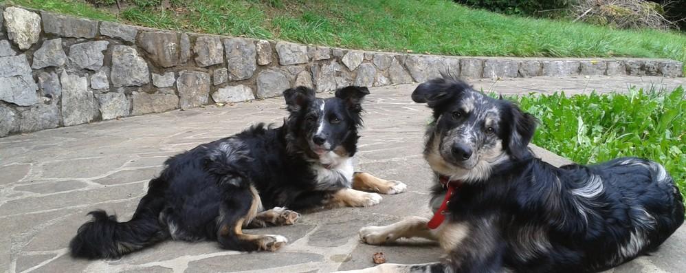 Ambriola: spari a un cane, ucciso  «Ma siamo forse nel Far West?»