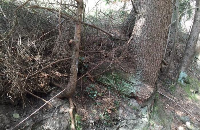 Il cavo trovato nel bosco il 12 aprile
