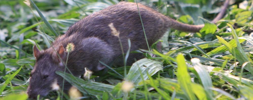 Topi nel giardino dell'asilo Bimbo morsicato: è polemica