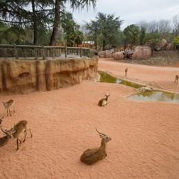 Ecco le  nuove Cornelle - foto e video  10 mila metri quadri di savana
