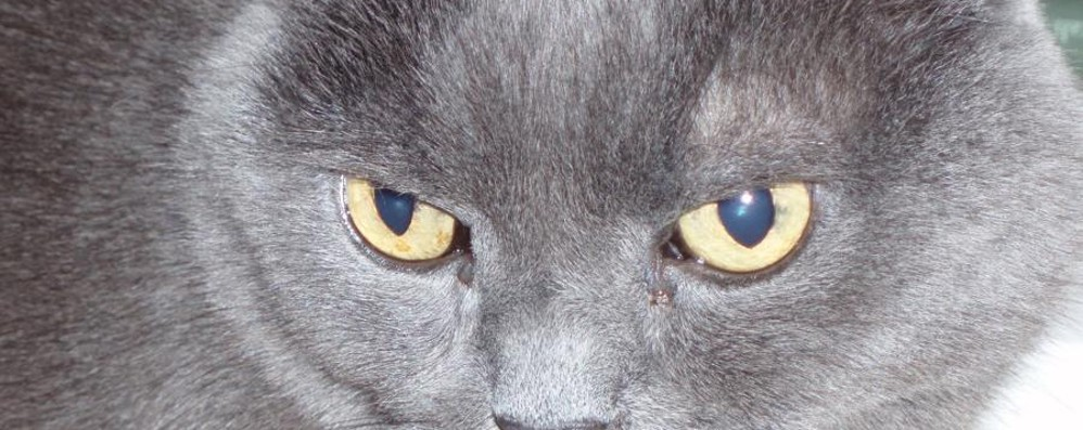Gatto morto in un sacco a Romano Su Facebook la condanna diventa virale