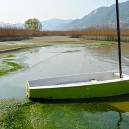 Sarnico e Clusane, lago in secca  C'è il rischio di dover dragare i porti