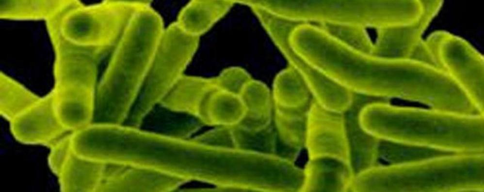 Tubercolosi sempre più «resistente» In Italia si registrano circa cinquemila casi