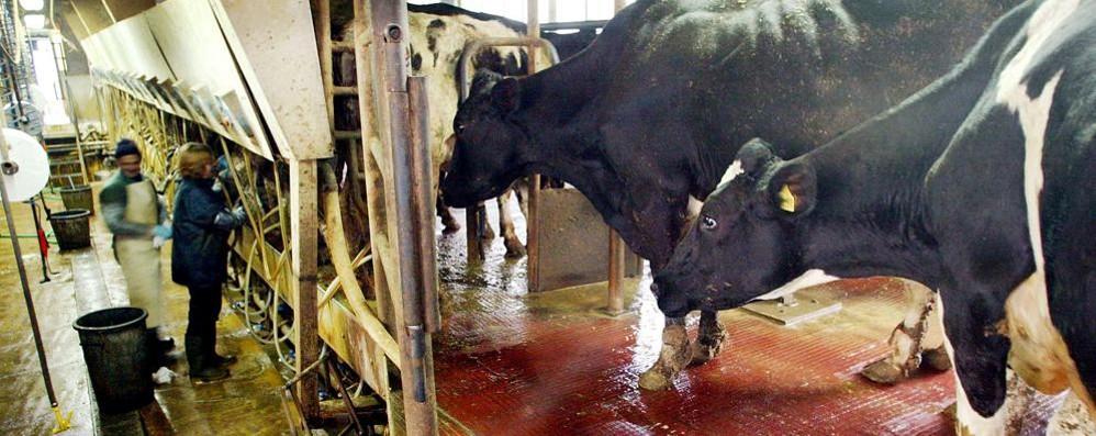 Prezzo del latte indicizzato al formaggio L'idea piace alla Confai di Bergamo