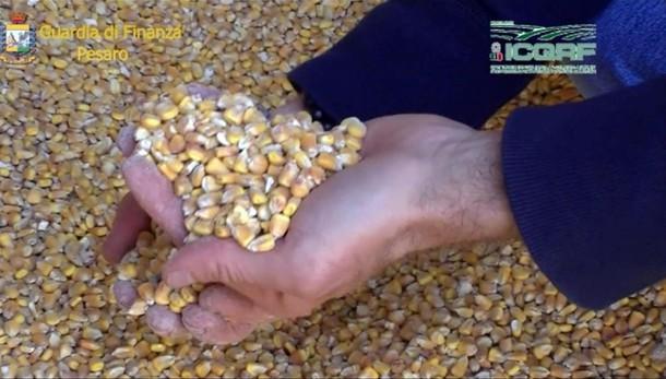 Cereali in carri rifiuti, 37 denunciati