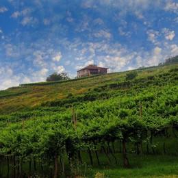 9. Impossibile gustare un bicchiere di buon vino - Vigneti in Valcalepio