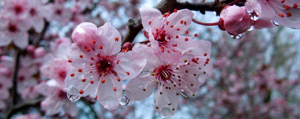 Meteo, sboccia la primavera sull'Italia A Bergamo massime fra 20 e 21 gradi