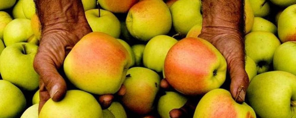Frutta self service, fenomeno che cresce  Nella Bergamasca vale 250 mila euro