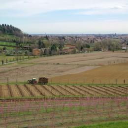 Agricoltura italiana la più green d'Europa