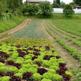 Il decalogo dell'agricoltura sostenibile