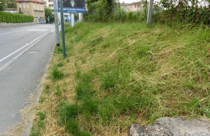 Il verde in città: via Baioni