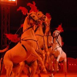 Animalisti contro il Circo Orfei «Sabato presidio in via Carducci»