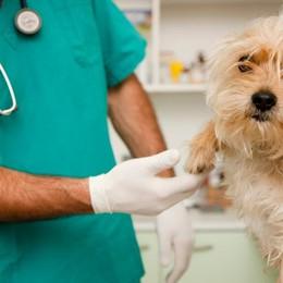 Una farmacista e 47 veterinari a giudizio «Ricette fantasma». «No, un equivoco»