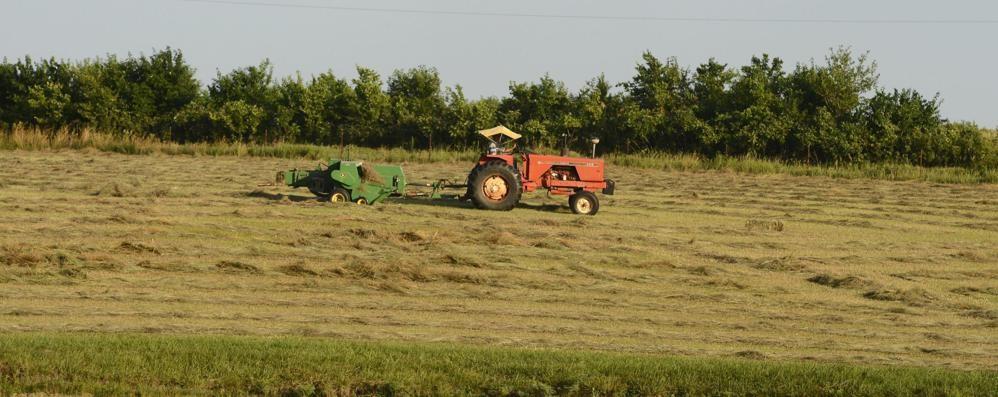 Fondi europei in ritardo, Coldiretti: «A rischio 3.600 aziende agricole»