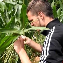 Un viaggio alla scoperta del mais (Bedolis, imm+intv)