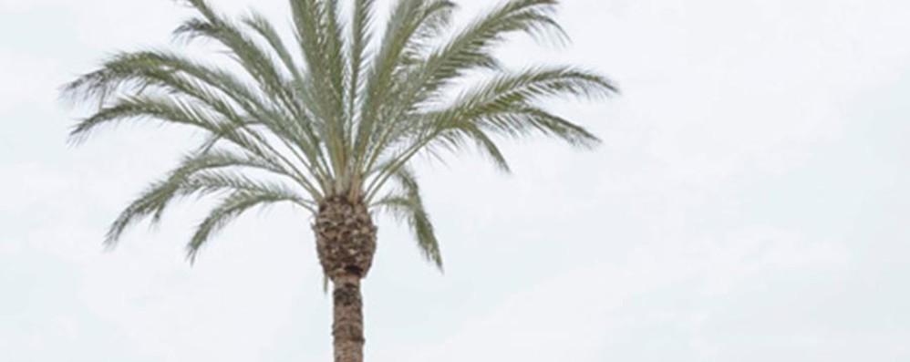 La palma più alta di Expo? Arriva da Alzano ed è in Bahrein