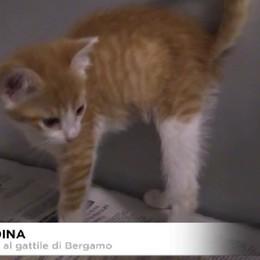 Visita al Gattile di Bergamo.