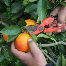 Peppino il contadino 2.0 Virtuale, ma frutta vera