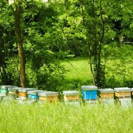 Anche Milano adotta le api per fare il suo miele