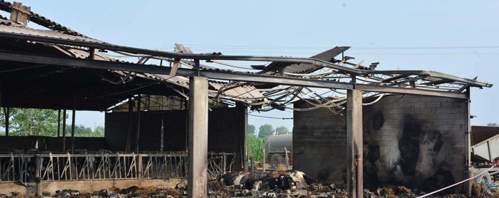 Incendio in stalla di Fara Olivana Perse 10 manze, indagini sulle cause