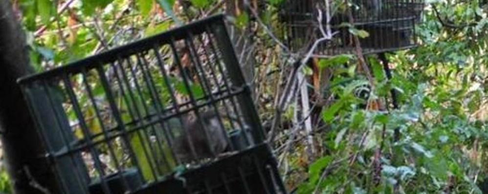 Stop cattura dei richiami vivi Esultano i gruppi animalisti