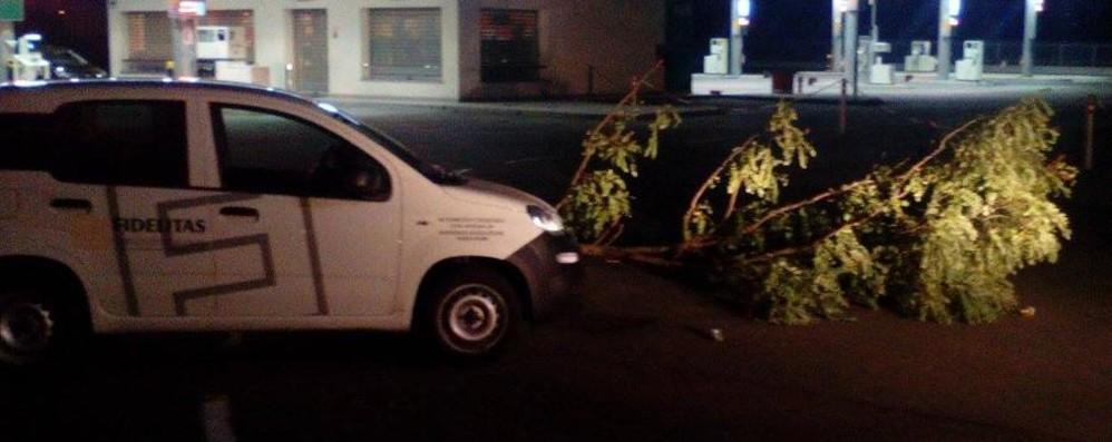 Costa Mezzate, tagliano alberi per razziare tabacchi in un benzinaio