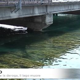Sebino: emergenza alghe. Revocate la deroga al limite minimo del lago, l'appello dei sindaci