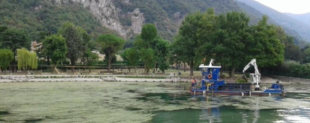 Ecco il lago d'Iseo sommerso dalle alghe Battelli spazzino in azione al Lido Nettuno