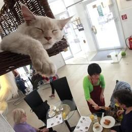 L'insolita Amsterdam Un caffé per chi ama i gatti