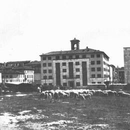 Pecore al pascolo in pieno centro Bergamo come non l'avete mai vista