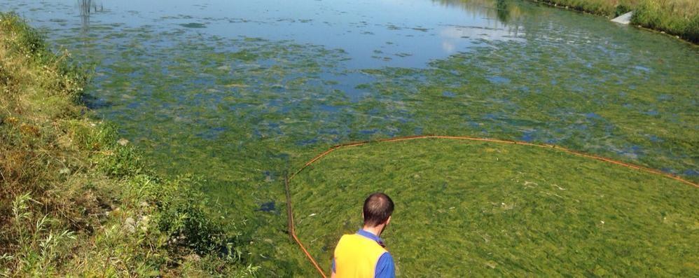 Un tappeto verde in acqua tolte le alghe laghetto della for Acqua verde laghetto