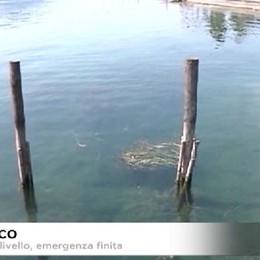 Alghe sul lago: servono interventi mirati