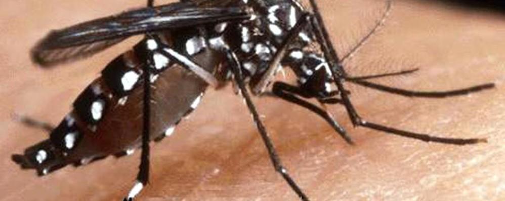 «Febbre del Nilo» in Lombardia Come continuare la lotta alle zanzare